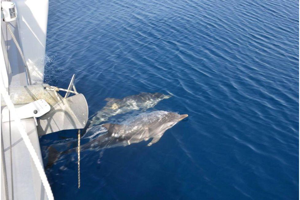 Регата на Ионических островах (фото 2)